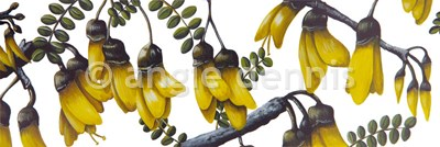 Kowhai Sorry out of Stock